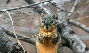 Why Most Entrepreneurs Have Squirrel Tendencies